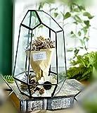 Sotoboo Unregelmäßige Geometrische Glas Terrarium Handgefertigt Air Pflanzen-Halter Tischplatte Miniatur Behälter des Frischen Moos Farn Übertopf Display Box Case für Geschenk