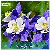 Shoopy Star 20Pcs Red Japanischer Ahorn Palmatum Atropurpureum Pflanze Baum Samen Garten