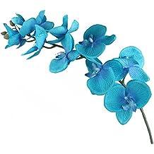Suchergebnis auf Amazon.de für: blaue orchidee