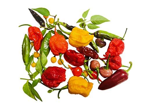 Chili-Samen Mix 20 Arten zu jeweils 10 Samen (200) Samen + Anzuchtanleitung