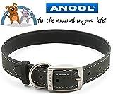 Ancol Pet Product & Bikes4life Limited Ancol & bikes4life 36–46cm m grau Leder Timberwolf Hundehalsband (British Made)