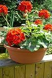 TESTRUT - Blumenschale terrak.farbig 45 cm