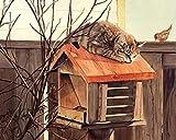 Wowdecor DIY Malen nach Zahlen Kits Geschenk für Erwachsene Kinder, Malen nach Zahlen Home Haus Dekor - Vogel Schlafende Katze Briefkasten 40 x 50 cm ohne Rahmen