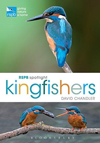 rspb-spotlight-kingfishers