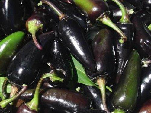 Neuheit! Chili, scharf, Serrano purple - 20 Samen