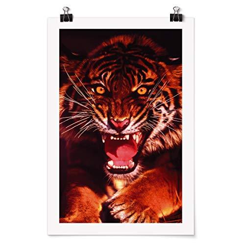 Poster Galerieprint - Wilder Tiger - Selbstklebend seidenmatt 105 x 70cm -
