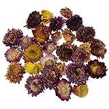 Inselfeld Natürliche Getrocknete Strohblumen Gänseblümchen Chrysanthemum Farbig ca.20g für Aromatherapie Duft Weihnachtsdekoration Handwerk DIY