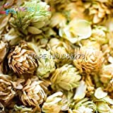 Green Seeds Co. 20 Stück Hopfen. Humulus Lupulus bonsai Seltene Bier Blume Pflanzen Form Rhizome 2016 Jardin Neue Bonsai Semente Plantas: Armee Grün