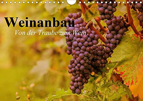 raube zum Wein (Wandkalender 2020 DIN A4 quer): Schöne Impressionen vom interessanten Weinbau (Geburtstagskalender, 14 Seiten ) (CALVENDO Natur) ()