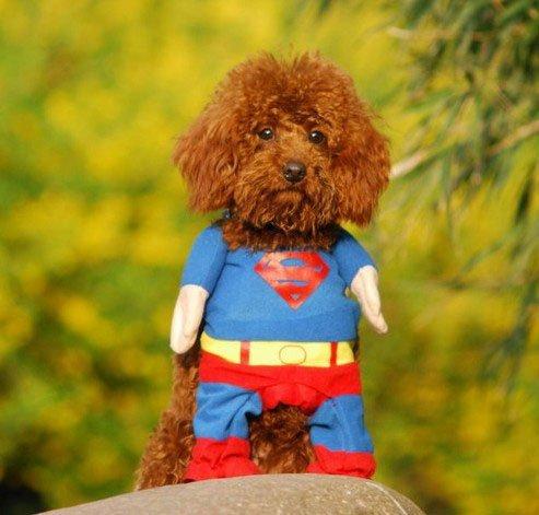 Hunde Kleidung Katze Kleidung Superhund Haustier-Kleidung Superman Hundewelpen Katzen-Halloween-Haustier Kleidung Kleidung für Hunde Katze-Tierbedarf (Medium (Hals: 25-30 cm))