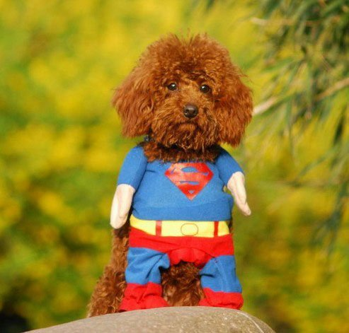 Hunde Kleidung Katze Kleidung Superhund Haustier-Kleidung Superman Hundewelpen -