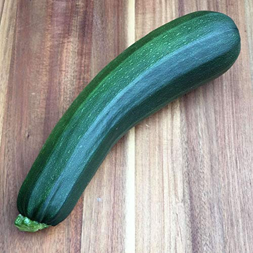 Shoopy Star 5 g - pa refermable protection: Squash (ÃtÃ) 'Black Beauty Courgette' - (Cucurbita pepo)