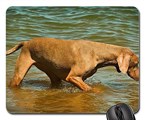 Gaming-Mauspads, Mauspad, Hund Weimaraner Animal Pet Animal Portrait 3