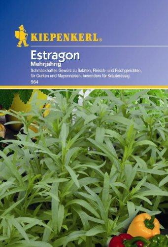 Estragon Samira mehrjährig