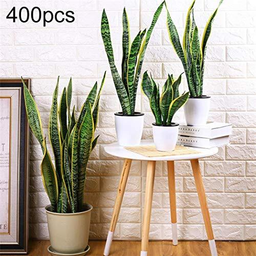 DNelo Semillas Plantas Las Semillas 400Pcs Sansevieria