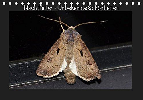 Nachtfalter - Unbekannte Schönheiten (Tischkalender 2019 DIN A5 quer): Heimische Nachtfalter aus Ostwestfalen (Monatskalender, 14 Seiten ) (CALVENDO Tiere)