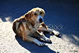 druck-shop24 Wunschmotiv: Homeless Dog on The Street in