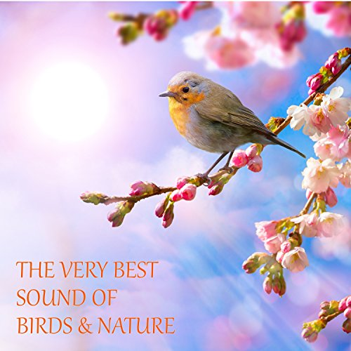 The Very Best Sound Of Birds And Nature (With Rain, Forest, Creek, River, Wind, Thunder)
