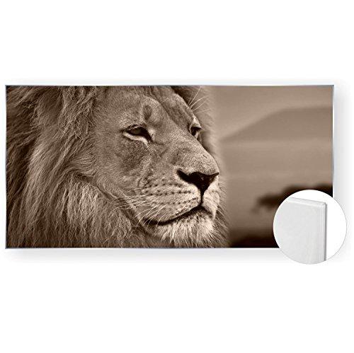 Acrylglasbild Acryl Glasbilder 120x60 cm 5mm edel Panorama Löwe Afrika Farbe sepia, Material Ohne Gravur-Rahmen