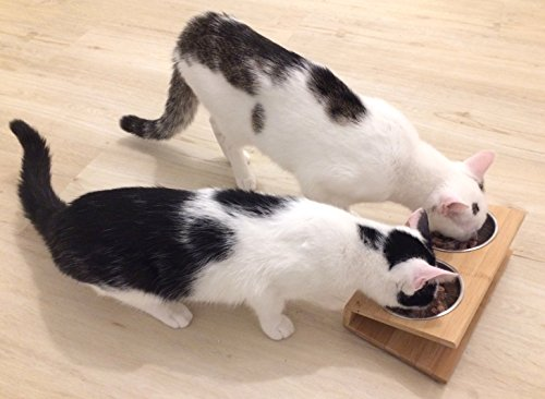 Le più belle cucce per gatto foto informazioni e prezzi petspress