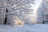 azutura Winterwald Fototapete Weiße Bäume Wald Tapete Schlafzimmer Haus Dekor Erhältlich in 8 Größen Riesig Digital