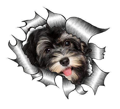 Sticar-it Ltd ZERRISSENES METALL Auto-aufkleber süß Havaneser Welpe Hund design Vinyl decal - Multi, Small 105x130mm approx -
