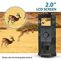 LLY Animales Salvajes, la cámara de diputados de 120 ° 16 1080 p sensores Infrarrojos