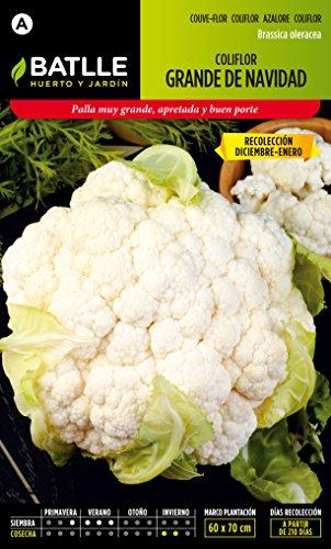 semillas-batlle-coliflor-grand-noel-dic-ene