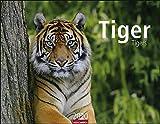 Tiger 2020 44x34cm