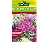Dehner Blumen-Saatgut, Riesen-Strahlen-Aster
