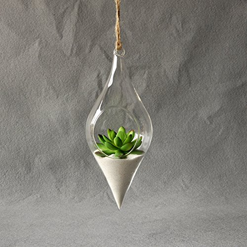 Kicode Jarrón de vidrio colgante Terrario Hidropónico Planta Flor Co