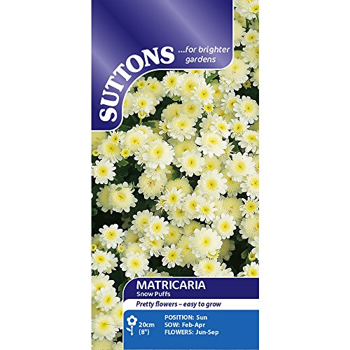 suttons-seeds-122870-matricaria-snow-puffs-seed-250-pieces