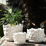 Home & Style Moderne weiße Keramik Mini-Topf künstliche Sukkulenten Pflanze/Behälter/Blumentopf 3 Stück