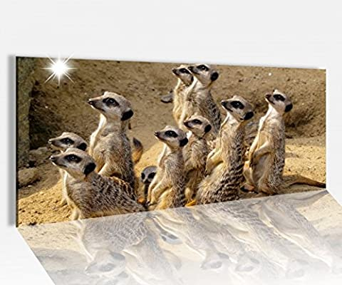 Acrylglasbild 120x50cm Erdmännchen Afrika Wüste Surikate Acrylbild Glasbild Acrylglas Acrylglasbilder 14A1298, Acrylglas Größe1:120cmx50cm