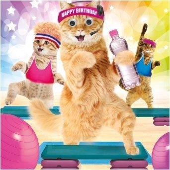 Biglietto Di Auguri Per Compleanno Motivo Gatti In Palestra Con