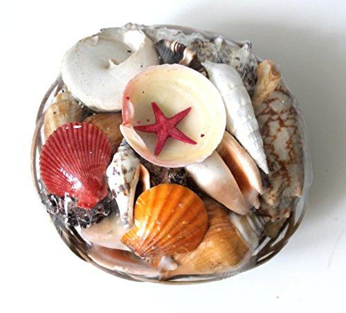 16cm Muschelkorb mit 400g Muscheln gefüllt zur Deko + Sammeln