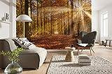 Komar - Fototapete GOLDEN DAWN - 368 x 254 cm - Tapete, Wand Dekoration, Laubwald, Wald, Natur, Landschaft, Baum - 8-997