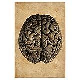 artboxONE Poster 30x20 cm Menschen Anatomie des Gehirns hochwertiger Design Kunstdruck - Bild Menschen von Artkuu