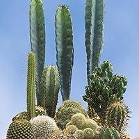 Suttons Seeds 106463 Prickly Characters Samen, für Kaktus