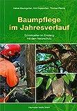 Baumpflege im Jahresverlauf: Schnittzeiten im Einklang mit der Naturschutz