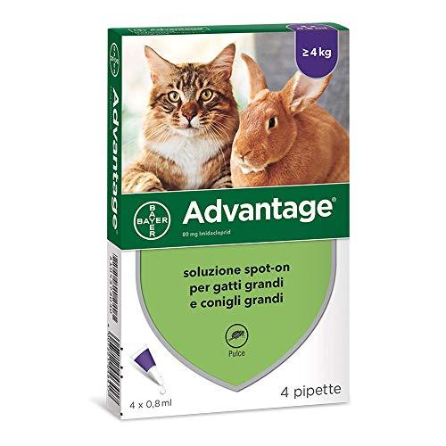ADVANTAGE SPOT ON 80 per gatti/conigli oltre 4 kg.