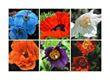 RP Seeds Perennial Poppy Seed Collection - 6 Packets. Save 25% on normal prices.