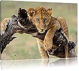 Giovane leone in natura, formato: 120x80 su tela, XXL enormi immagini completamente Pagina con la barella, stampa d'arte sul murale con telaio, più economico di pittura o un dipinto a olio, non un manifesto o un banner,