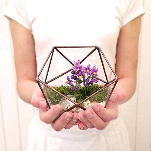 ikosaeder-klein-geometrische-glas-terrarium-handgemachtes-glas-ubertopf-modernes-pflanzgefass-fur-de