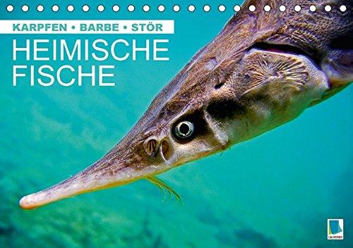 Heimische Fische: Karpfen, Barbe, Stör (Tischkalender 2017 DIN A5 quer): Fische in unseren heimischen Gewässern (Monatskalender, 14 Seiten ) (CALVENDO Tiere) [Mar 25, 2016] CALVENDO, k.A.