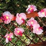 Safield - Set 12 luci ad orchidea per il giardino