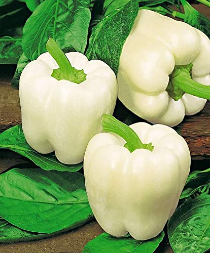 shopmeeko 100 pz piante di peperoncino fai da te giardino domestico piante a crescita rapida verdure peperoncino * paprika sementes per jardin bonsai vegetale: giallo