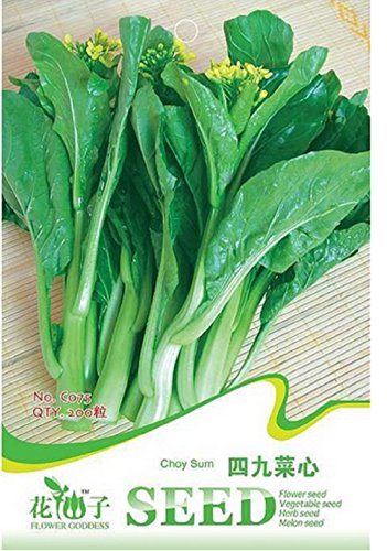 200-semi-di-rapa-campestris-ravizzone-choy-sum-cavolo-cinese-brassica-campetris-lsspchinensis-varuti