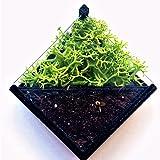 Pin's para plantar, viene con semillas y el suelo orgánico