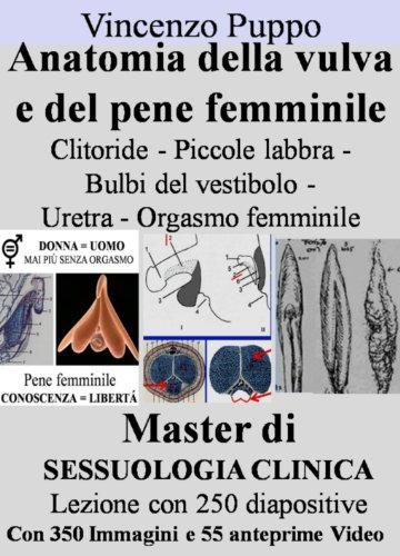 Anatomia della vulva e del pene femminile clitoride piccole labbra anatomia della vulva e del pene femminile clitoride piccole labbra bulbi del vestibolo uretra orgasmo femminile fandeluxe Images